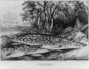 Photopickerelc1872currier And Ivesphotographfishwatertrees
