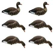 Final Approach Live Full Body Specklebelly Goose Decoys, 6 Pack