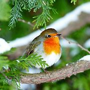 Ambiente Christmas Napkin 33 Centimetre Pack Of 20 Robin In A Tree