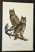 Audubon's Birds Of America - Great Horned Owl - First Edition Octavo Plate 39