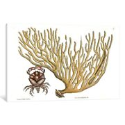 Icanvas Catesbyand039s Natural History Seriesred Clawed Crab And