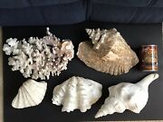 Huge Lot 50+ Ex-large, Unique, Beautiful Sea Shells Coral Collection Must See
