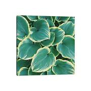 Icanvas Some Like It Hosta By Chelsea Victoria Canvas