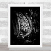 Leopardand039s Lair Leopard Africa Kruger Fangs Angry Fear Roar Cry Dark Art Print