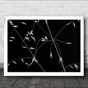 Crossed Lines Abstract Graphic Seeds Straw Straws Grass Seed Wall Art Print