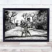 Action Madagascar Children Toys Natural Bicycle Happy Smile Wall Art Print