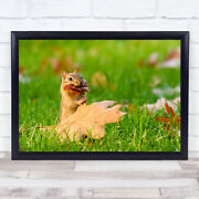 Ready For Winter Squirrel Collecting Leaves Wall Art Print
