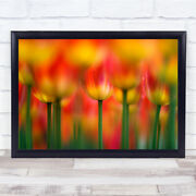 Side By Tulip Tulips Summer Flower Flowers Red Passion Wall Art Print
