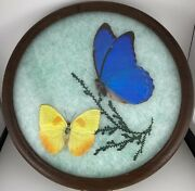 Vintage Butterfly Display Mounted Butterflies Taxidermy Set In A Round Frame 9