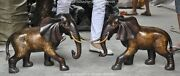 24 Chinese Fengshui Bronze Elephas Maximus African Animal Elephant Statue Pair