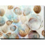 Shells 1 Giclee Print Canvas Wall Art Extra Large