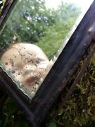 The Most Frightening Antique Mirror Ever Haunted 1800s Shabbyprimitive Eeks