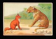 Antique Victorian Era Trade Card For Gibeson Pianos Leopard And Fox Cute
