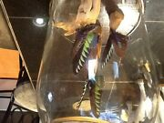 Vintage Butterflies Mounted On Driftwood Under Glass Dome Taxidermy 12 Tall 8