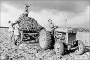 Poster, Many Sizes Fordson Tractor And British Womens Land Army 1940s Harvesting
