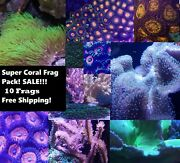 Super Coral Pack 10 Frags Easy Polypsleathers Zoanthids Torches Saltwater