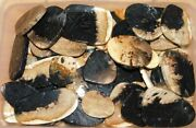 Natural Brown Plume Agate Superb Slices Cabochons Wholesale Lot Best Prices