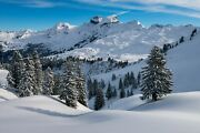Tree Mountain Winter Forest Snow Nature Environment Landscape Hd Poster