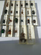 Real Insects Beetle In Resin Big 23 Collection Taxidermy Bug Paperweight