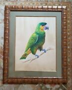 Pair Of Very Special Large Antique Parrot Watercolors