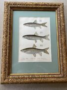 Large Framed Fishes Plate 1839 Very Good Condition Accepting Best Offers