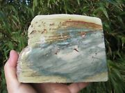 Gary Green Rough Rock Larsonite Fossil Bog Lapidary Cabs Slabs Sphere Decor 4.4