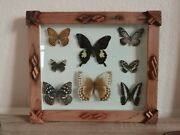 Big Antique Butterfly In Glass.collection Rustic Framed 8 Real Butterflies.ussr