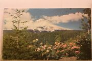 Oregon Or Mt Hood Rhododendron Union Oil 76 Gas Postcard Old Vintage Card View