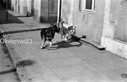 2 Vintage Photo Negative Strips 35mm - 2 Dogs Playing And Woods