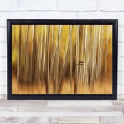 Yellow Orange Spring Trees Tree Trunks Abstract Leaf Leaves Wall Art Print
