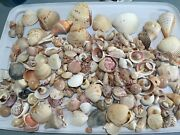 Seashells Huge 5 Lb + Variety Mixed Size Shape Type Lot For Craft Art Decorate
