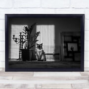 Art Black And White Sat Cat Plant Pot Candle Holder Wall Print