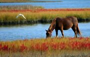 Oil Painting Handpainted On Canvas A Horse Grazing By The River Seagulln876