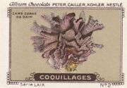 Staghorn Coral Shell Vintage Trade Ad Card Stamp 1920