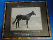 Photographie Ancienne Cheval Pur Sang Arabe Coq Dand039or Circa 1930 Alep Syrie