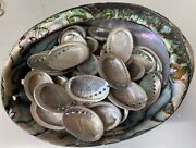 75 Baby Abalone Shells For Home Decor Crafting Jewelry Free Shipping Seashell