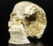 Huge 7.9 Coral Fossil Carved Crystal Skull Realisticcrystal Healing073