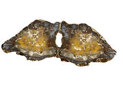 Hubbard Basin Petrified Wood Matching Pair Butterfly Slabs Polished Front