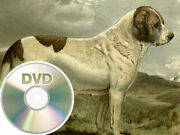 72 Antique Books About Dogs - Dvd