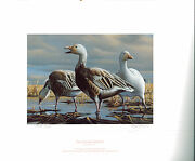 Minnesota 7 1983 State Duck Stamp Print Blue/snow Geese By Gary Moss List 200