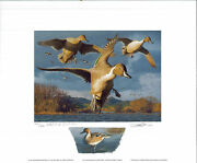 California 27 1997 State Duck Print Robert Steiner Color Remarque 42/400