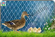Poultry Netting 35and039 Ducks Geese Chickens Quail Game Birds Pen Net Aviary Netting