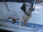 Phillip Crowe Lmt Ed Lithograph English Setter 388 Of 950 Signed Certificate