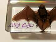 Real Bat In Resin Block - Lilly's Coffin-custom Made-united States
