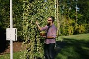 Ibex All In One Universal Hops Growing System 30and039 Grow Train And Harvest Hops