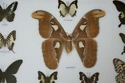 Real Butterfly Taxidermy Insect Framed Glass Entomology Mix Collection Of 10 Xxl