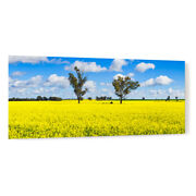 Trees In A Field Of Flowering Canola Crop Acrylic Wall Art Photo Print 3569