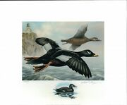 Minnesota 29 2005 Duck Stamp Print By David Chapman, Remarque + 2 Stamps