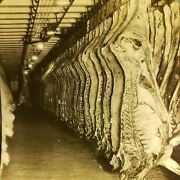 Slaughterhouse Meat Cooler Room Packing House Factory Photo Stereoview L70