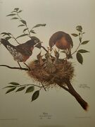 Ray Harm Robin- Male- Female-amazingly Beautiful-valuable Print- Going Up Soon